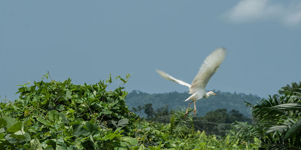 Five Places for Bird Watching