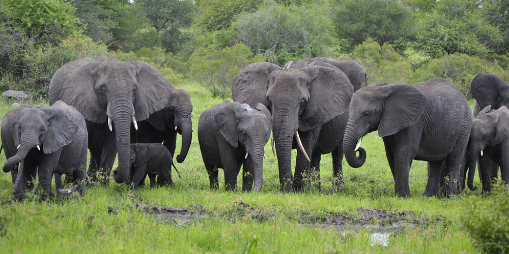 Exotic African Safaris