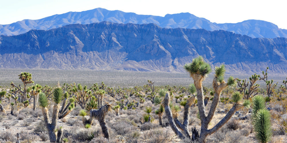 Largest Animal Sanctuaries to Visit in the United States