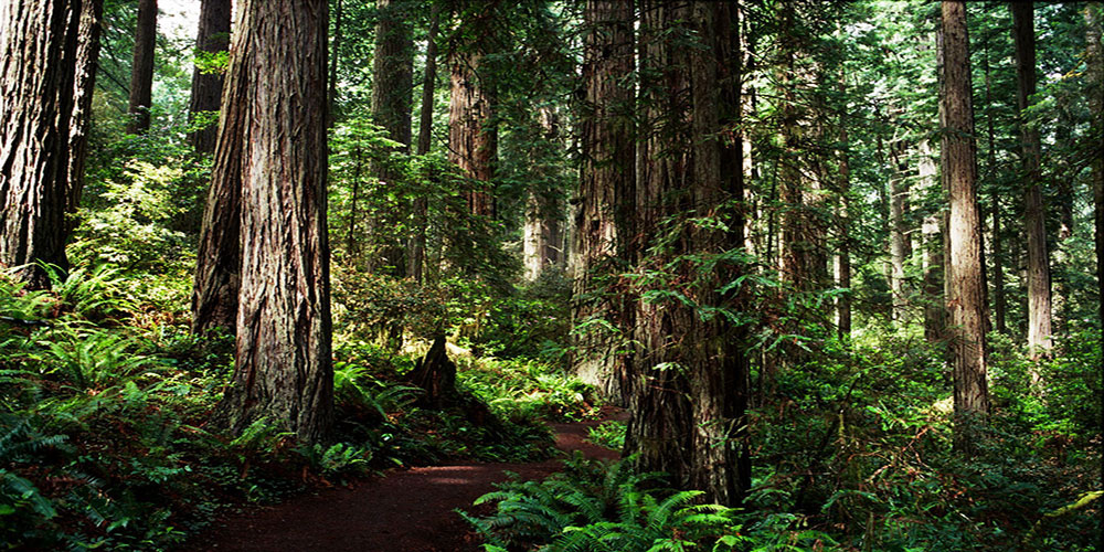 Five Most Common Areas to Visit Bigfoot
