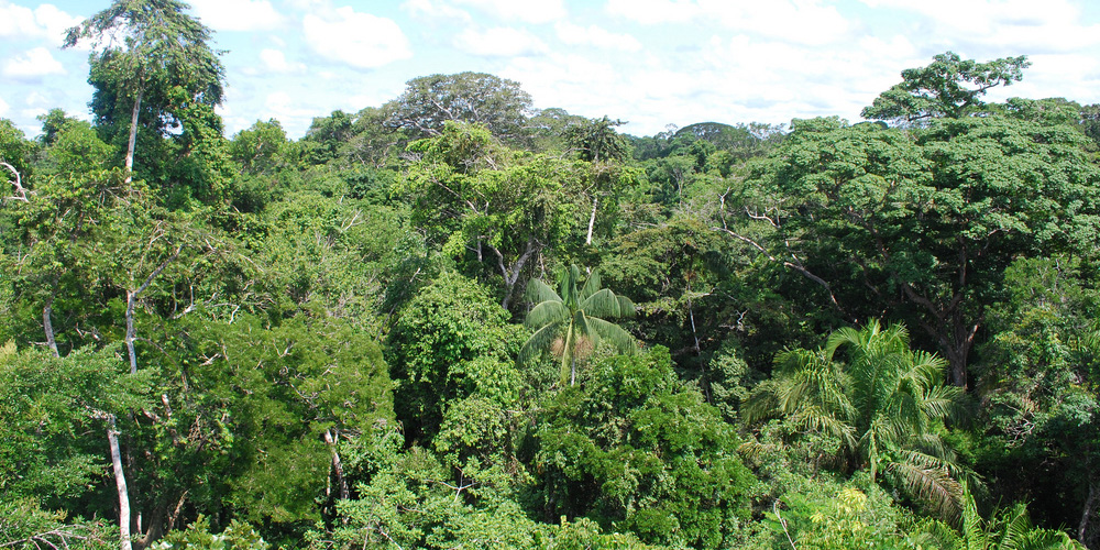 Rainforests_To_Visit_Image_1
