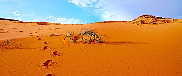 Five Fastest-Growing Deserts in the World