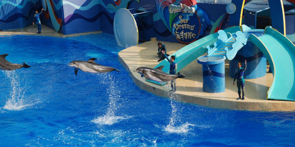 15_reasons_to_visit_hong_kong_ocean_park