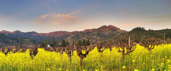 Where to stay in Napa Valley that's not a hotel